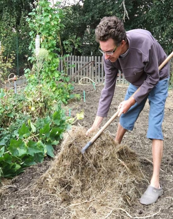 Le paillage avec du foin permet d'améliorer la structure du sol