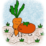carotte-aime-tomate