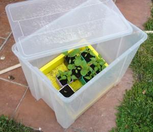 Une serre improvisée dans une caisse translucide