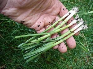Maintenant, ils seront beaucoup plus faciles à planter !