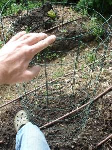Une cage pour les potimarrons