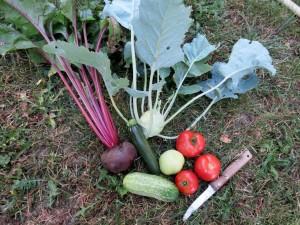 Betterave, courgette, chou-rave, concombres et tomates
