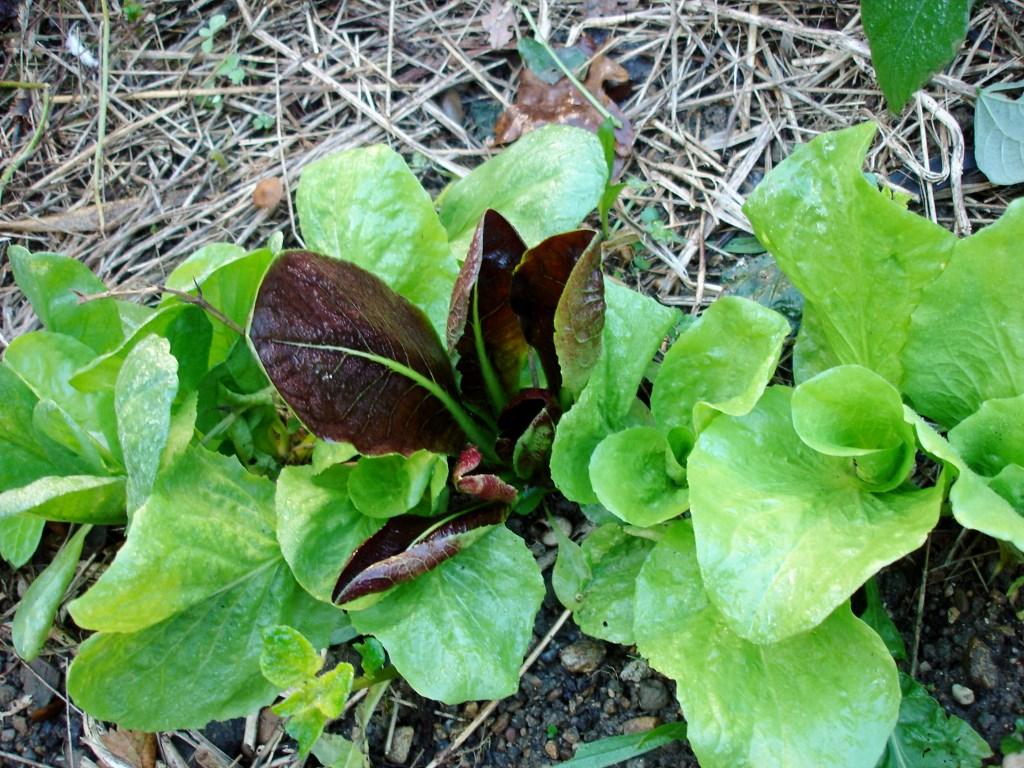 Legumes a planter pour l hiver - Quand planter les courgettes ...