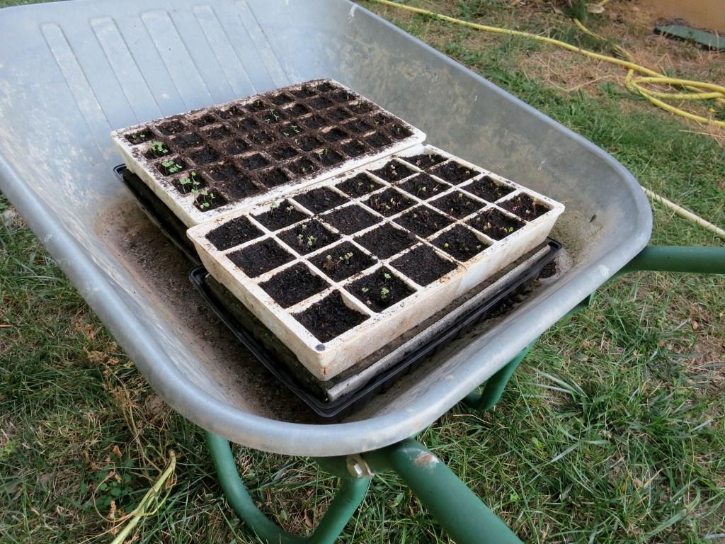 Quels Legumes Planter Apres Les Recoltes De L Ete Potagerdurable Com