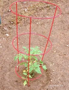Une cage à tomates américaine (source Southofmain)