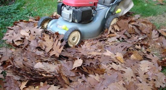 Les feuilles coriaces doivent être broyées