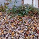 Pourquoi l'automne est le meilleur moment pour commencer un tas de compost