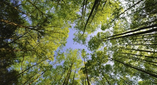 Les arbres : de véritables panneaux solaires