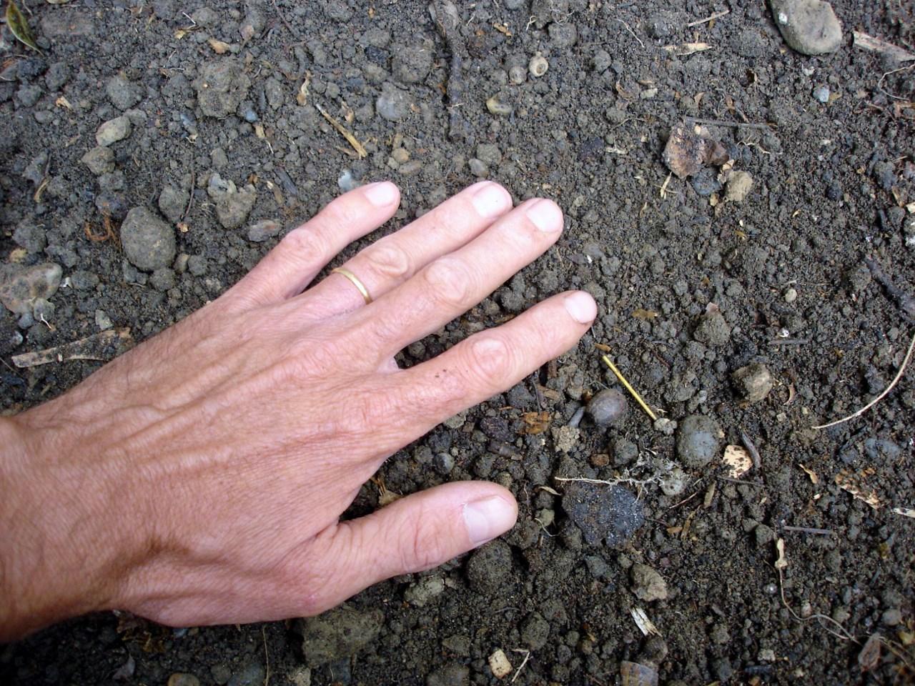 Semis en pleine terre au printemps 3 conditions pour les r ussir - Comment planter des jacinthes ...