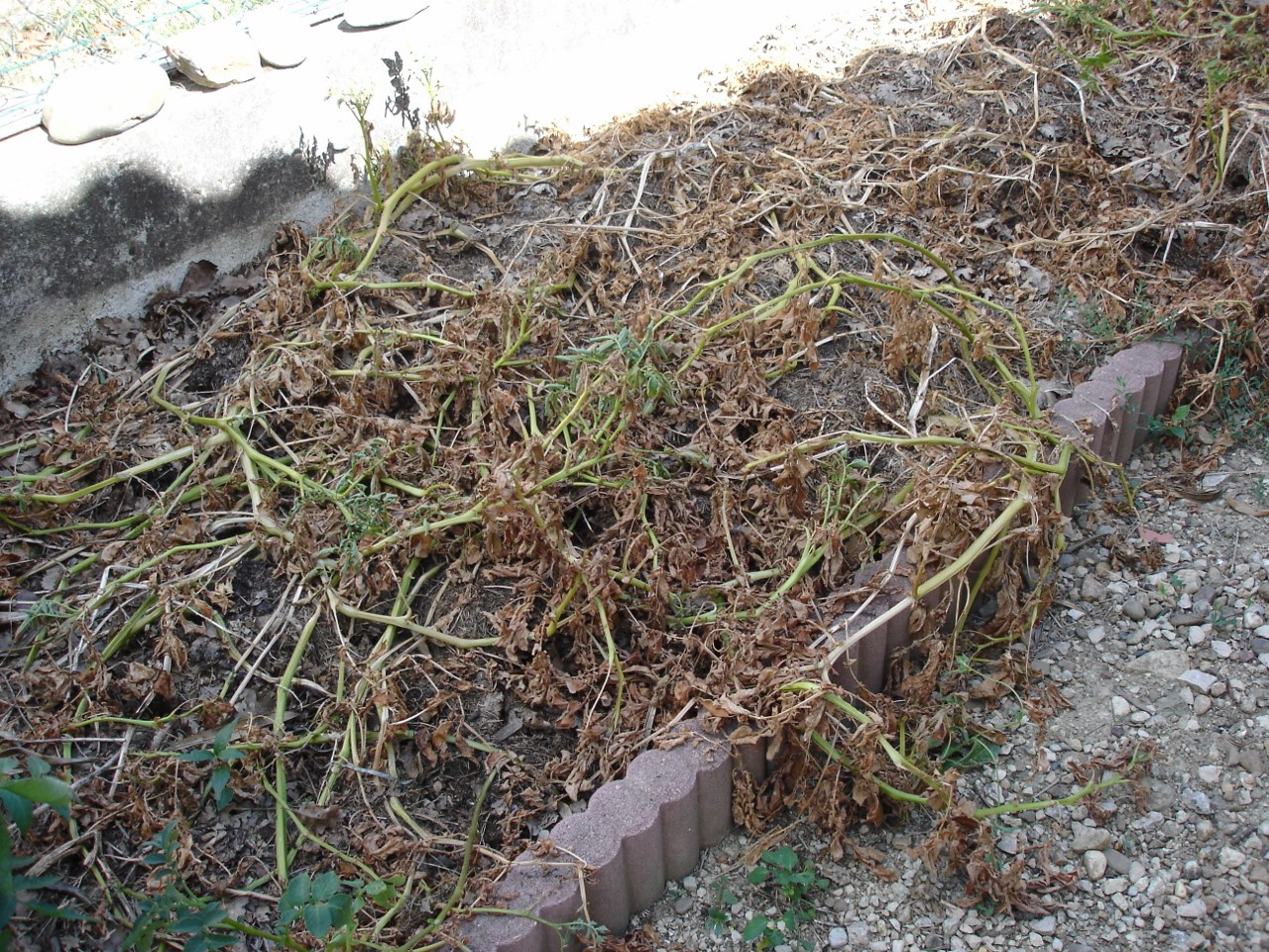 Un paillage vaut 10 arrosages - Bache noire jardin ...