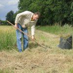 Ramassage d'herbes sèches fauchées par la commune