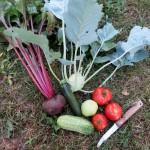 Trois techniques pour faire pousser plus de légumes au potager