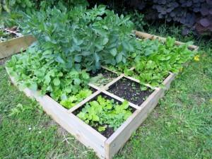 Soignez plus facilement vos plants avec une parcelle surélevée