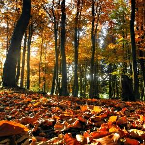 Une forêt automnale (par Mathias Liebing)