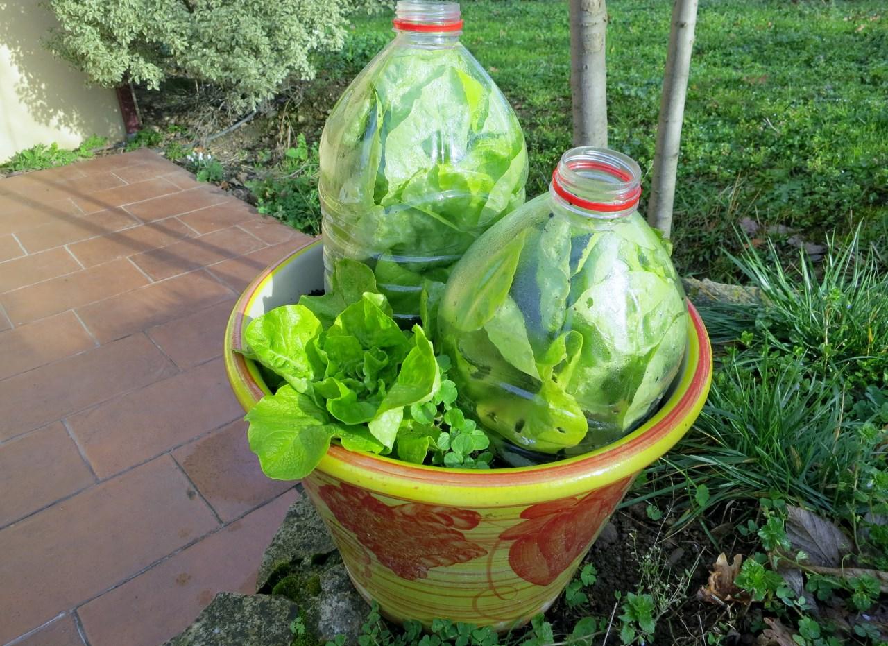 Comment tre autonome en salades toute l 39 ann e for Cultiver des autoflo en interieur