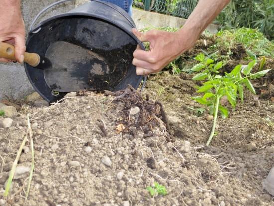 Rebouchage avec un mélange de compost + terre