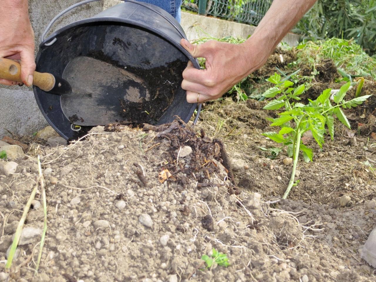 Comment faire pousser des tomates dans une terre pauvre argileuse et caillouteuse - Comment faire partir des abeilles de terre ...