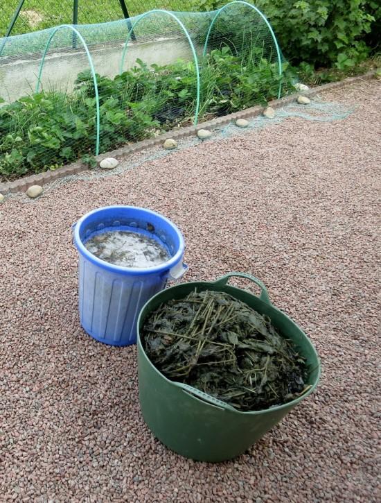 Fermentation de purin d'ortie et de consoude (mélanger souvent pour éviter les odeurs !)