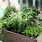 Herbes aromatiques: faites-vous ces 12 erreurs?