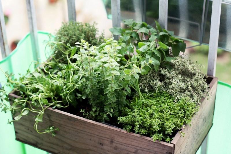 herbes aromatiques faites vous ces 12 erreurs. Black Bedroom Furniture Sets. Home Design Ideas