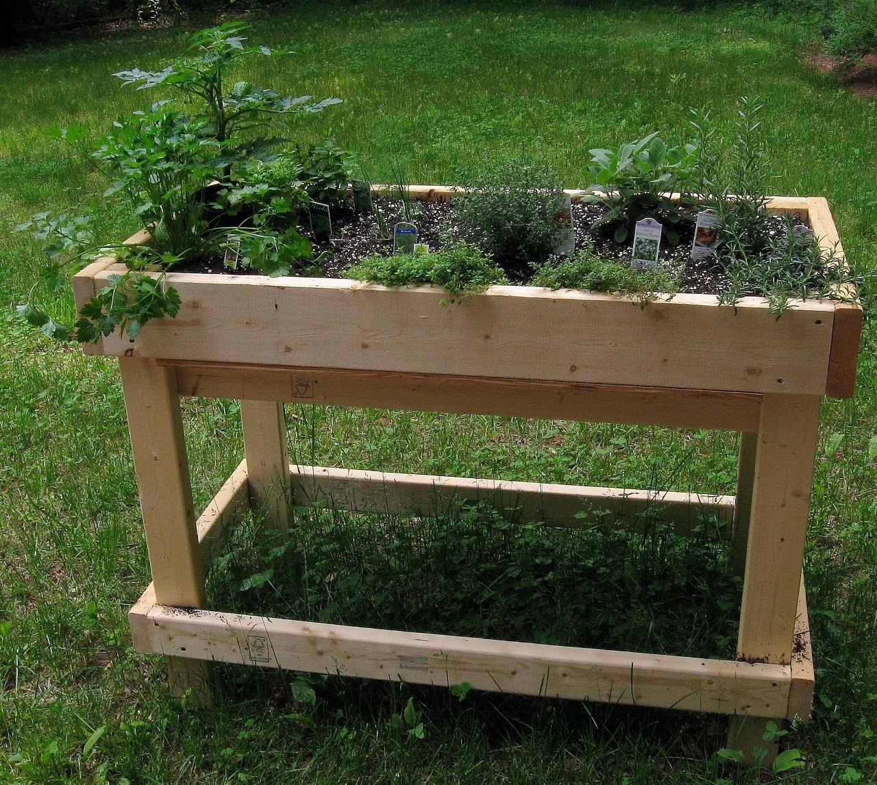 Herbes aromatiques faites vous ces 12 erreurs for Basilic culture interieur