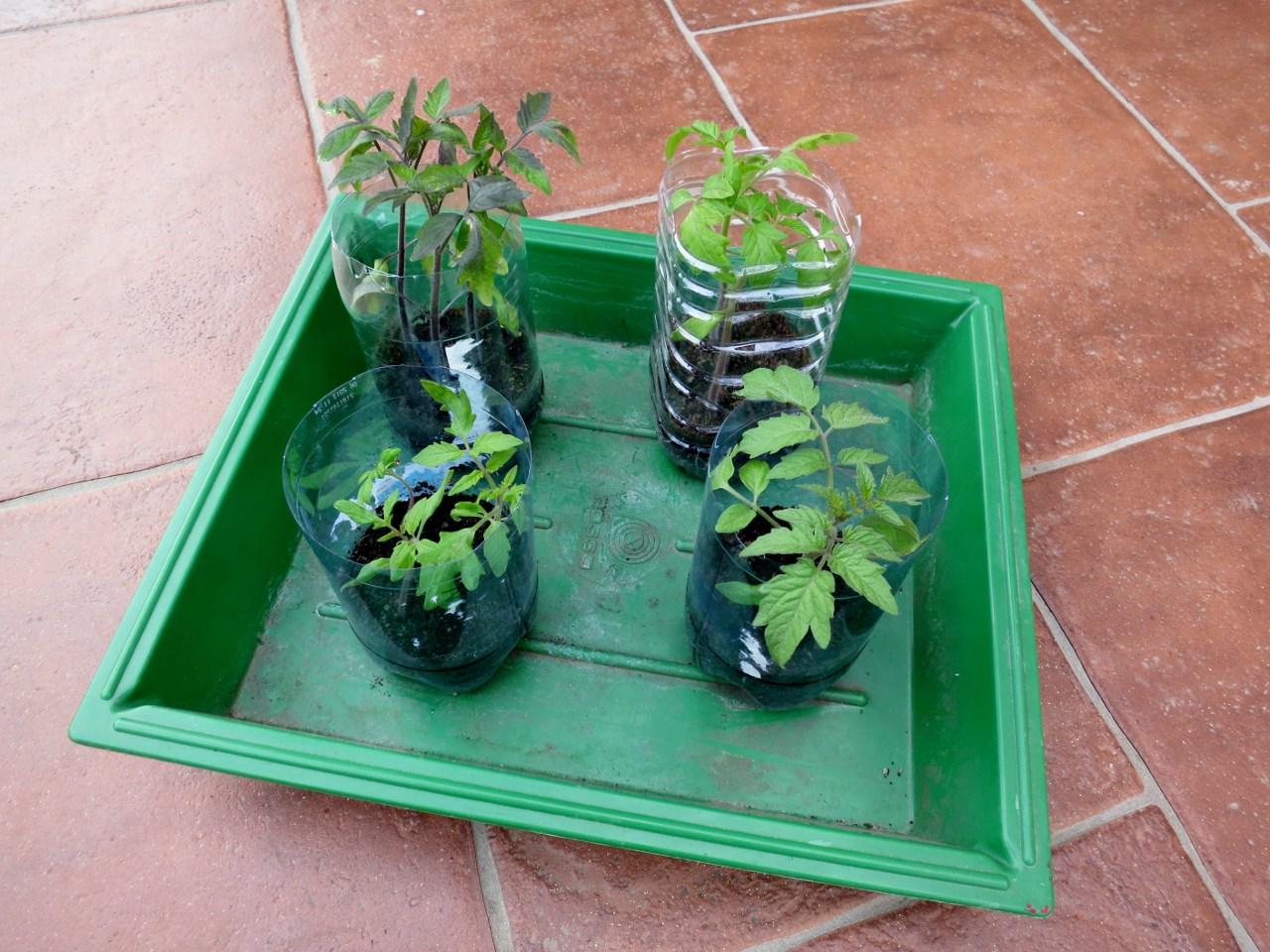 faut il pr f rer le semis en pleine terre ou en godets. Black Bedroom Furniture Sets. Home Design Ideas
