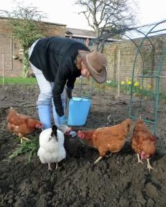 Les poules ont besoin de manger du grain aussi.