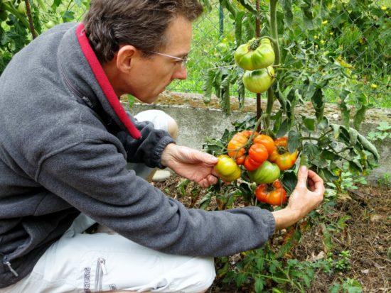 Après la récolte, il y aura encore le temps de repiquer des salades d'hiver