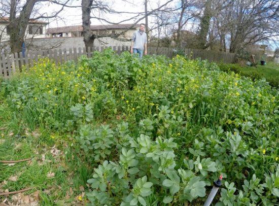 Début mars de l'année dernière, un biomax composé de féverole, d'avoine et de moutarde