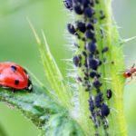 4 stratégies de lutte  contre les ravageurs et les maladies