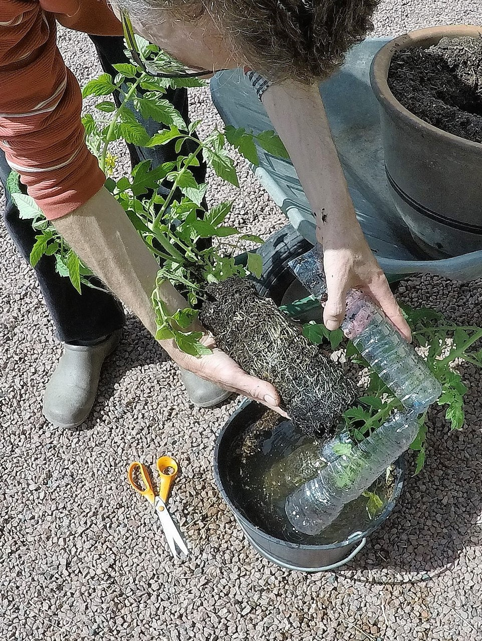 Ma culture de tomates en pots - Comment disposer des pots sur une terrasse ...