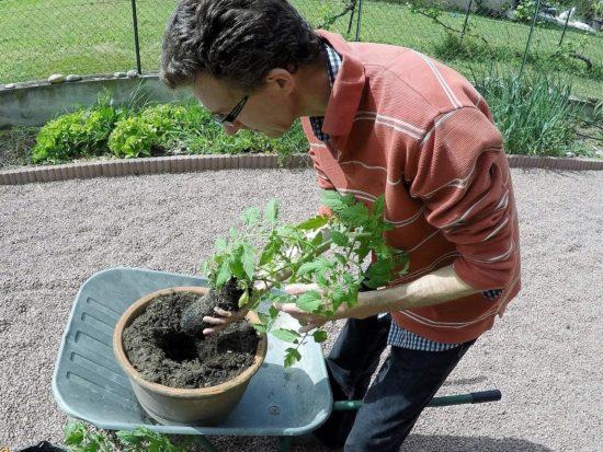 J'insère le plant délicatement jusqu'au fond du trou pour pas que la terre ne s'éboule