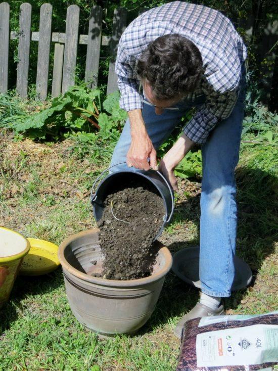 Les deux tiers du pot sont rempli avec un mélange moitié terre du jardin, moitié terreau.