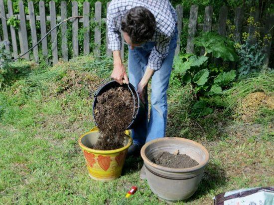 Le tiers restant des pots est rempli avec un mélange moitié compost maison, moitié terreau