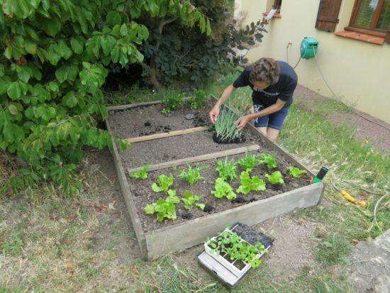 Le lendemain, les 3 cm d'eau sont montés par capillarité et la terre était devenue légèrement humide, juste ce qu'il faut pour les légumes.