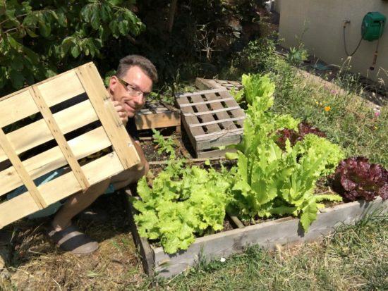 Des cagettes pour ombrer les jeunes plants de salades (au second plan)