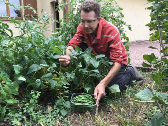 Je laisse pousser les herbes spontanées au milieu des tomates, haricots et groseilliers que l'on voit sur cette photo