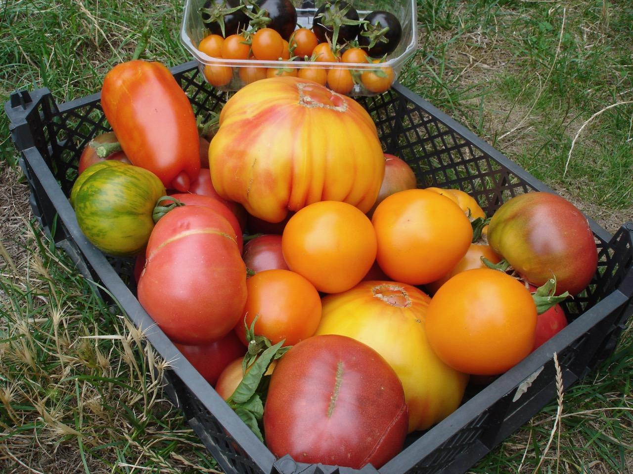 les 7 erreurs qui font rater vos semis de tomates. Black Bedroom Furniture Sets. Home Design Ideas