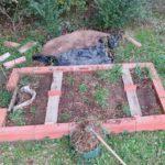 Démarrer un petit potager durable en permaculture (partie 4)